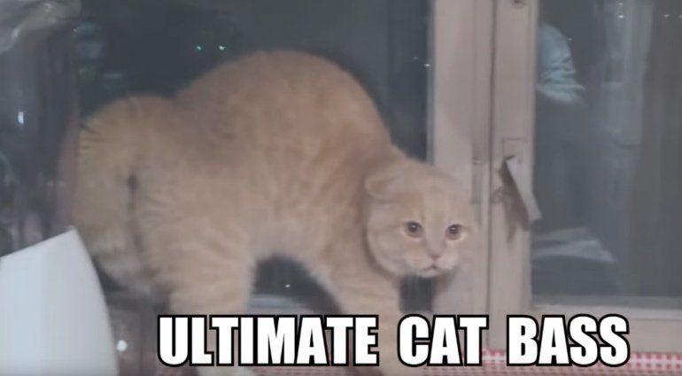 Ultimate Cat Bass Insane Cherry Animal Cover