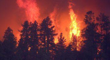 Waldbrand Feuer Bäume