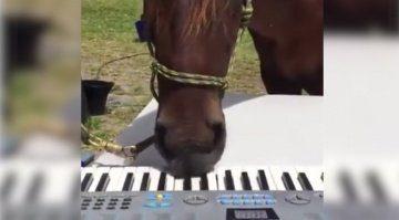 PFerd spielt Klavier Keyboard Andrew Huang