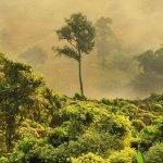 Charity-Auktion für den Regenwald: Audio Industry for Rainforests