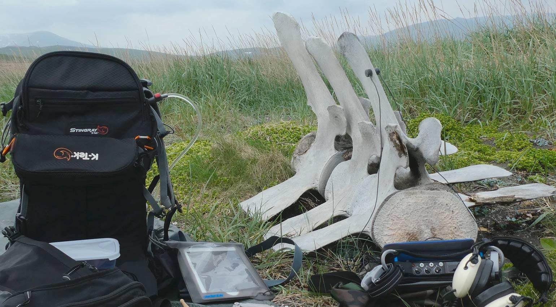 Glitchedtones Whale Bone Percussion