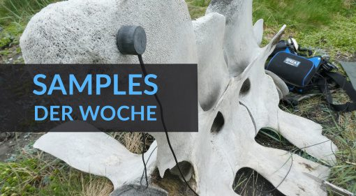 Samples der Woche: The Pool Project, Whale Bone Percussion, Landforms